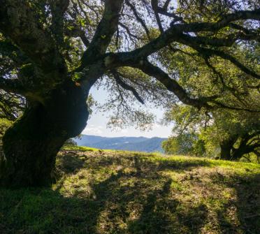 Tree beauty photo